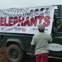 First Lady Margaret Kenyatta launches campaign to save elephants