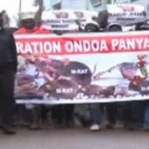 Rats  Taken to County Offices by Angry Nyeri Residents