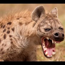 Residents find 19 bodies exhumed by Hyenas