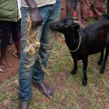 """Bungoma man arrested for having an """"affair"""" with goat"""