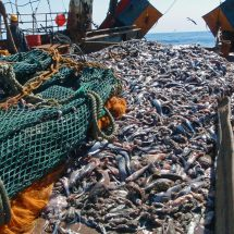 EU trains Liberian fisheries inspectors