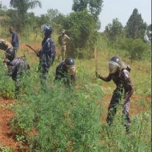 INTERPOL border operation targets organized crime networks across West Africa