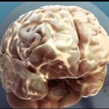 Alcoholic effects on the body and brain