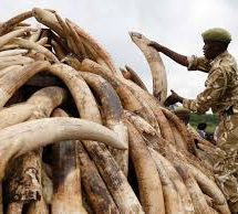 Petition for ivory trade ban praised