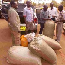 Taxi driver arrested with Sh2 million Bhang in Embu