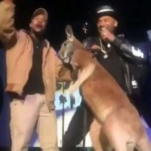 Mike Epps get slapped by terrified kangaroo on stage