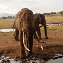 Tsavo destroyed, faces 'extinction' in 15 years