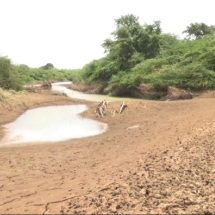 Irrigation farmers starring at huge financial losses