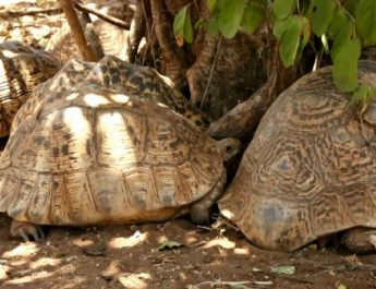 Meet the tortoise man of Kitui
