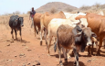 EU capitalizes 8b Ksh. towards developing pastoralist communities