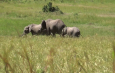 Farmers counting losses after elephants invaded their farms