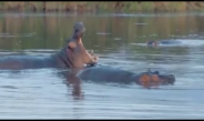 County Commissioner decry hippo poaching  By Nyandarua KNA Thursday July 29, 2021
