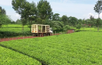 SMALLHOLDER TEA FACTORIES UNDER KTDA MANAGEMENT BEGIN MEETINGS TO APPROVE SECOND PAYMENTS